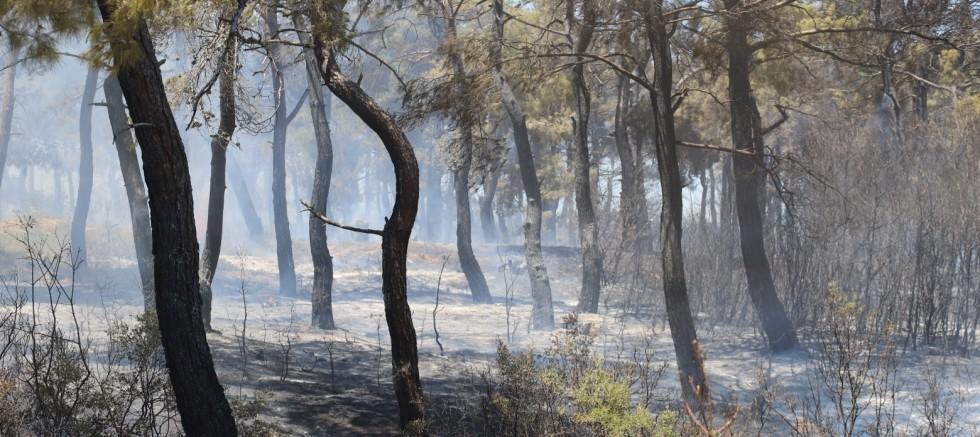 Adilhan-Sazlıdere Arasında Orman Yangını