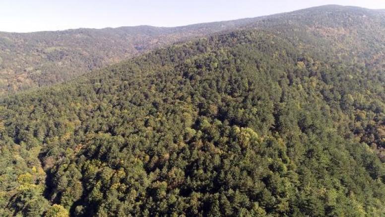 Çanakkale'de Ormana Girişler Yasaklandı