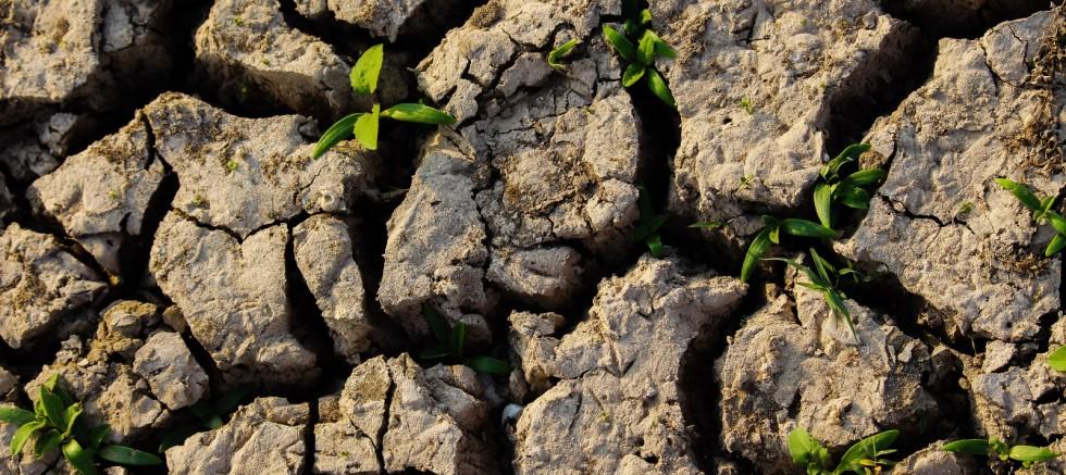 Çölleşme 1,5 Milyar İnsanın Hayatını Doğrudan Etkiliyor