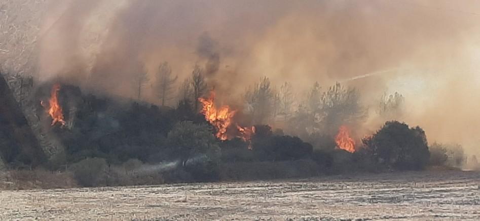 Kavakköy'de Yine Orman Yangını