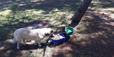 Belediye Bayramda Sokak Hayvanlarını Unutmadı