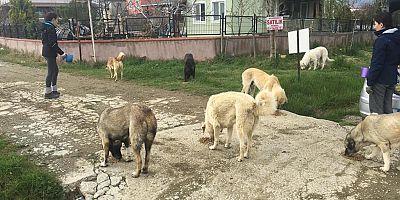 Dost Patiler Derneği, Sokak Hayvanlarının Yanında