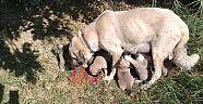 Sokak Hayvanları İçin 2'nci El Pazarı